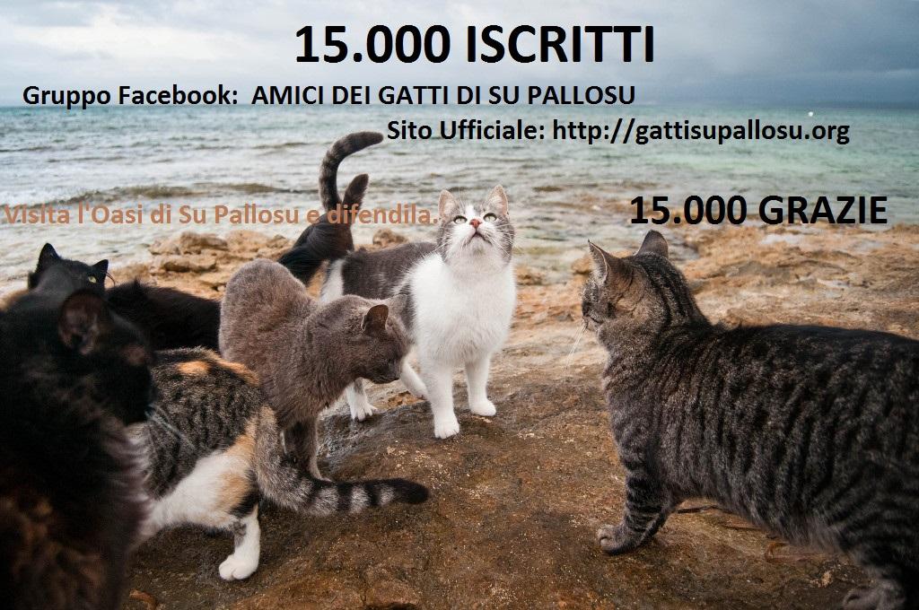 Record  Facebook: 15.000 Amici dei Gatti di Su Pallosu !