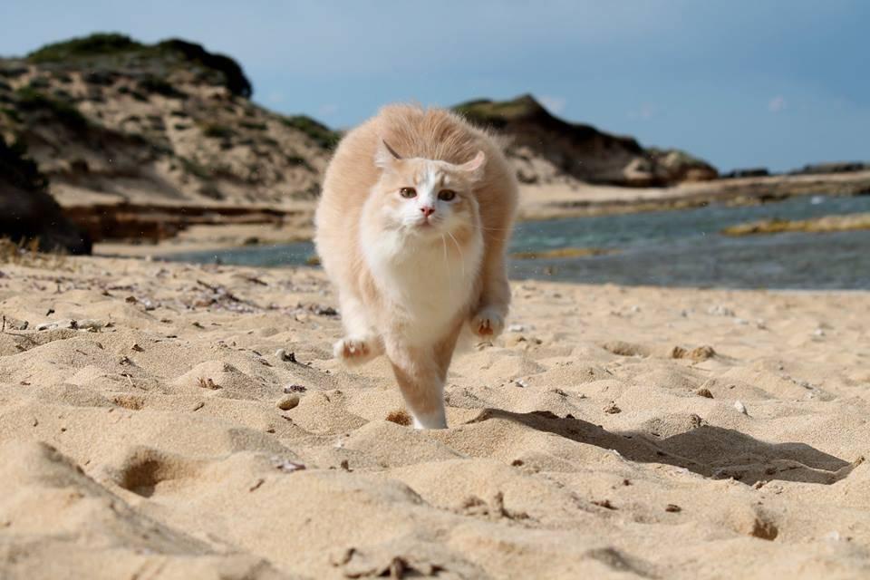 I gatti restano a Su Pallosu !