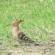 Per la salvaguardia di gatti e fauna selvatica di Su Pallosu