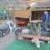 Su Pallosu: nuovo boxone in legno per l'Oasi Felina