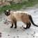 """Criminale in azione contro i gatti di Sa Rocca Tunda; """"il comune riconosca subito tutte le colonie feline della Marina"""""""