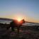 La magia dell'alba felina fotografica: domenica 19 giugno a Su Pallosu