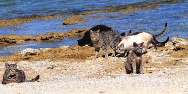 Su pallosu quinta migliore spiaggia di tutta la sardegna for Migliore lettiera per gatti