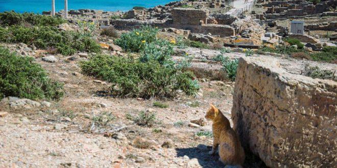 """Tharros """"copia"""" Su Pallosu: è boom ovunque del turismo felino"""